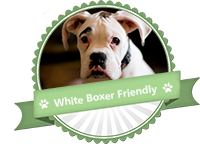 white boxer friendly
